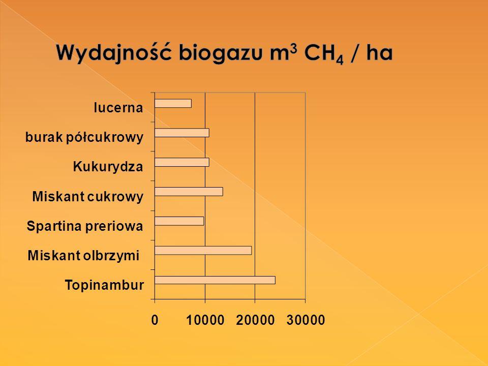 Wydajność biogazu m3 CH4 / ha
