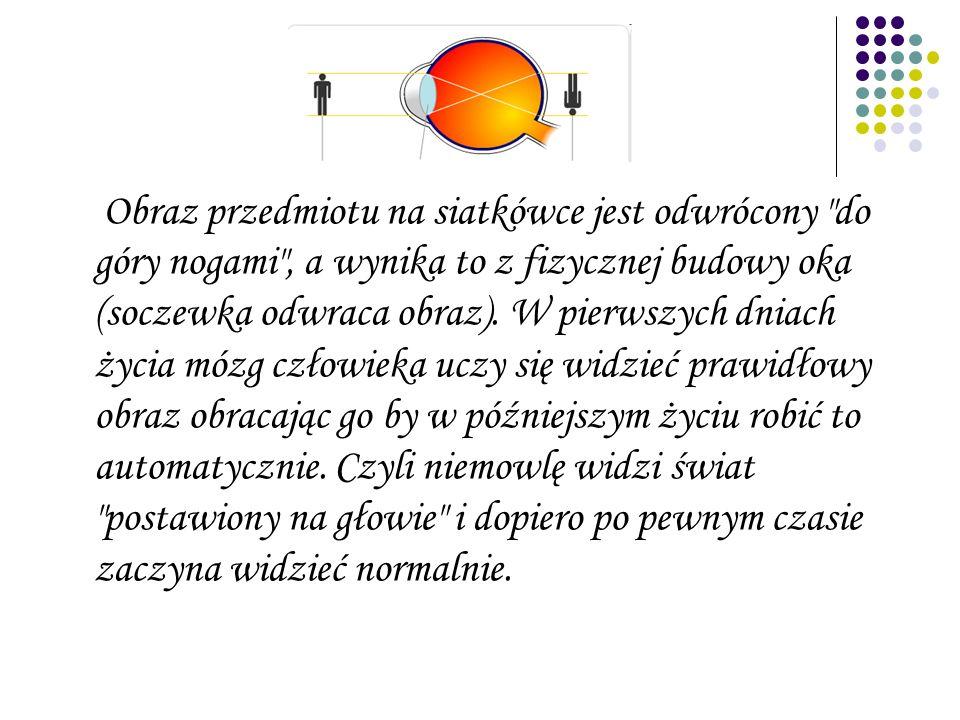 Obraz przedmiotu na siatkówce jest odwrócony do góry nogami , a wynika to z fizycznej budowy oka (soczewka odwraca obraz).