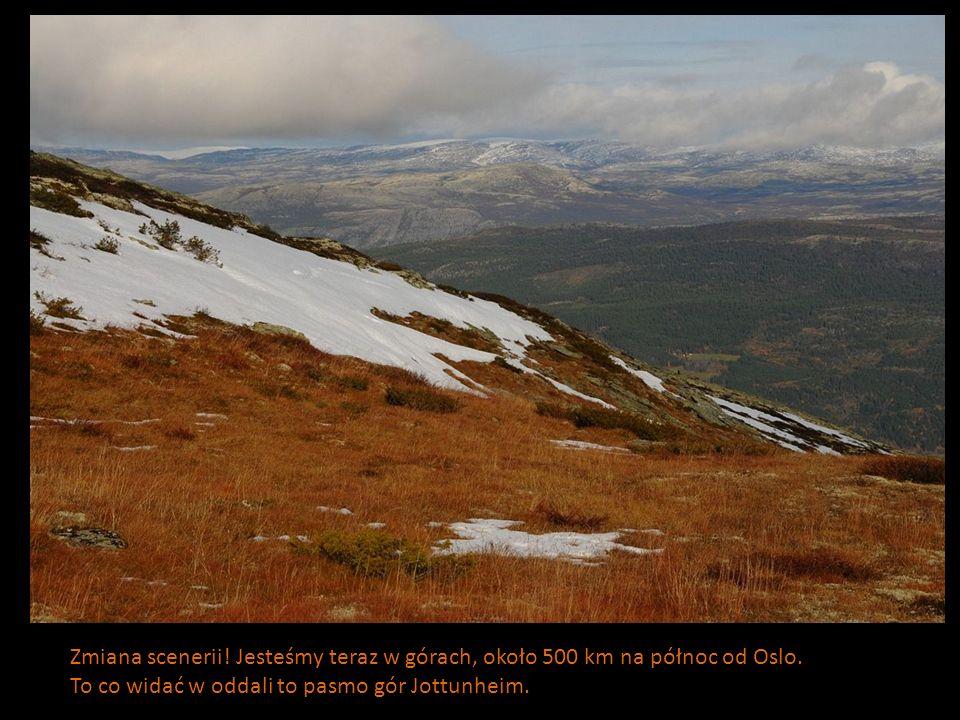 Zmiana scenerii! Jesteśmy teraz w górach, około 500 km na północ od Oslo.
