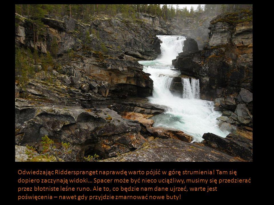 Odwiedzając Ridderspranget naprawdę warto pójść w górę strumienia