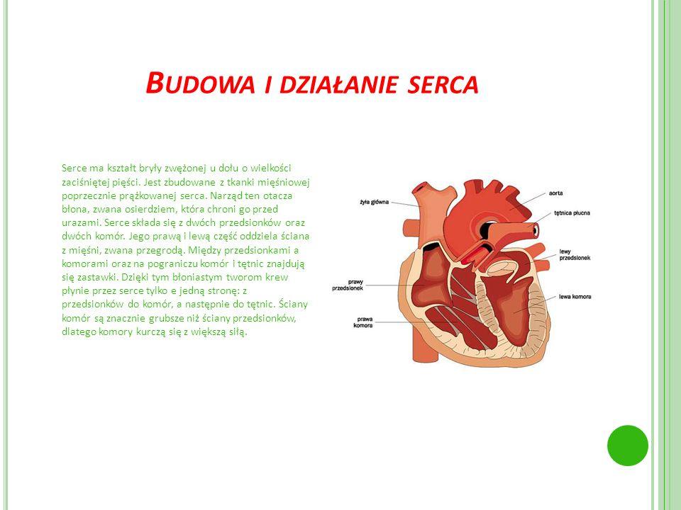 Budowa i działanie serca