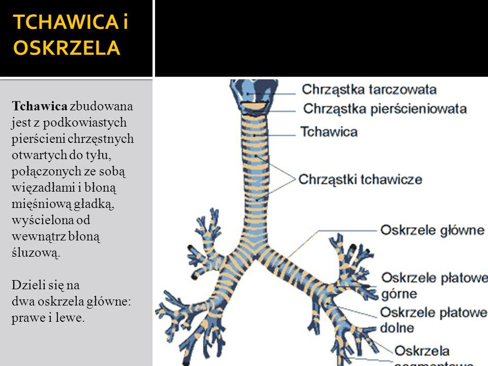 TCHAWICA i OSKRZELA