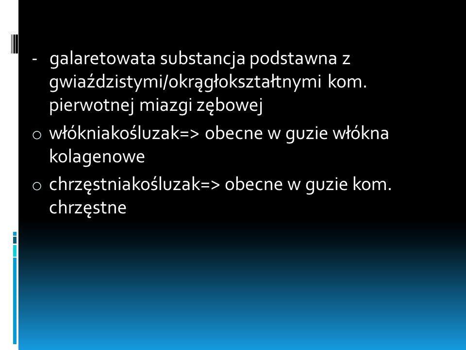 - galaretowata substancja podstawna z gwiaździstymi/okrągłokształtnymi kom. pierwotnej miazgi zębowej
