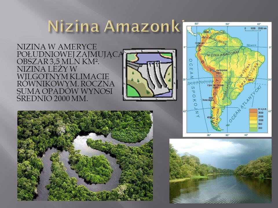 Nizina Amazonki