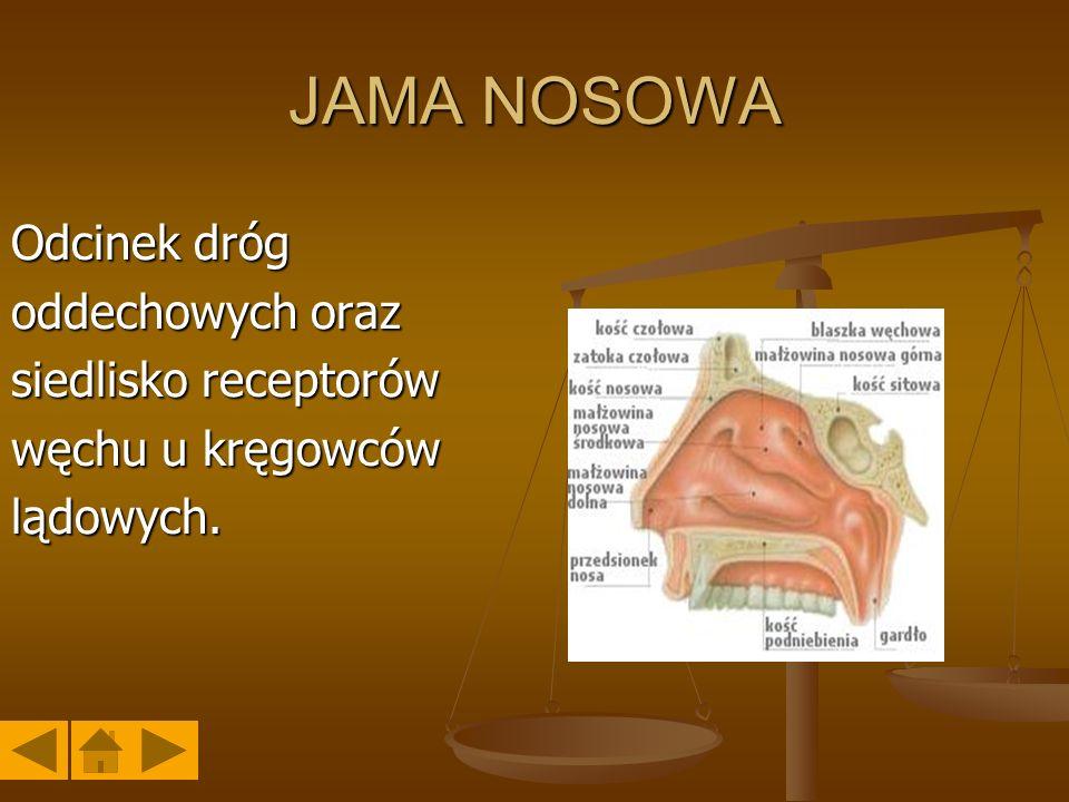 JAMA NOSOWA Odcinek dróg oddechowych oraz siedlisko receptorów
