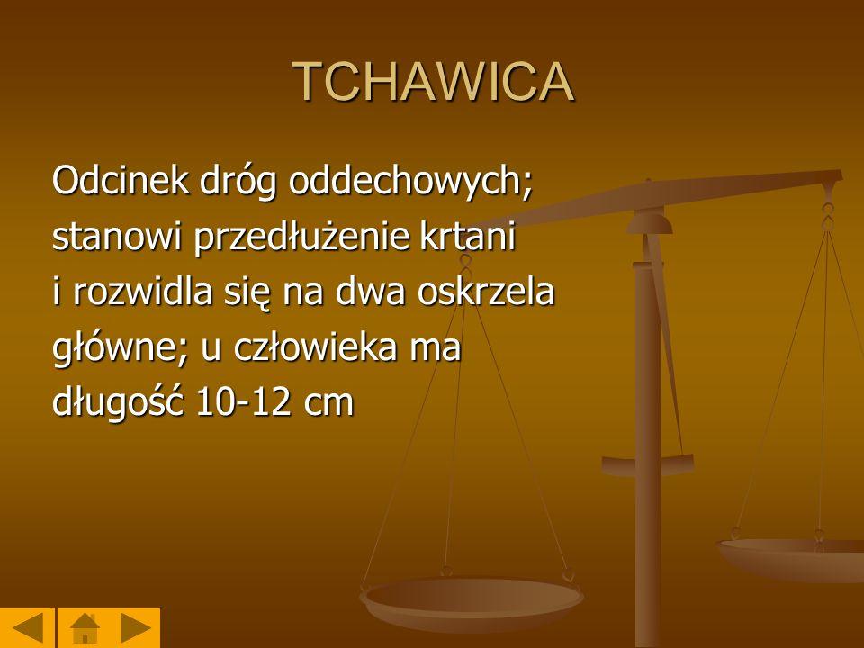 TCHAWICA Odcinek dróg oddechowych; stanowi przedłużenie krtani