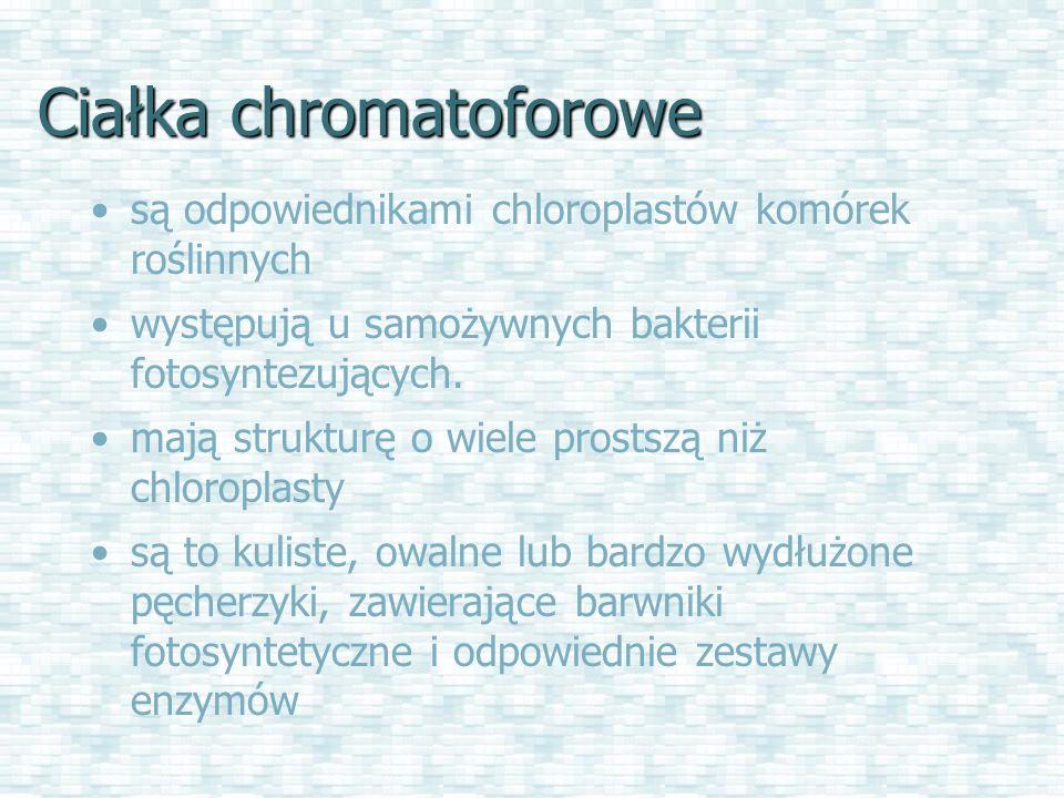 Ciałka chromatoforowe