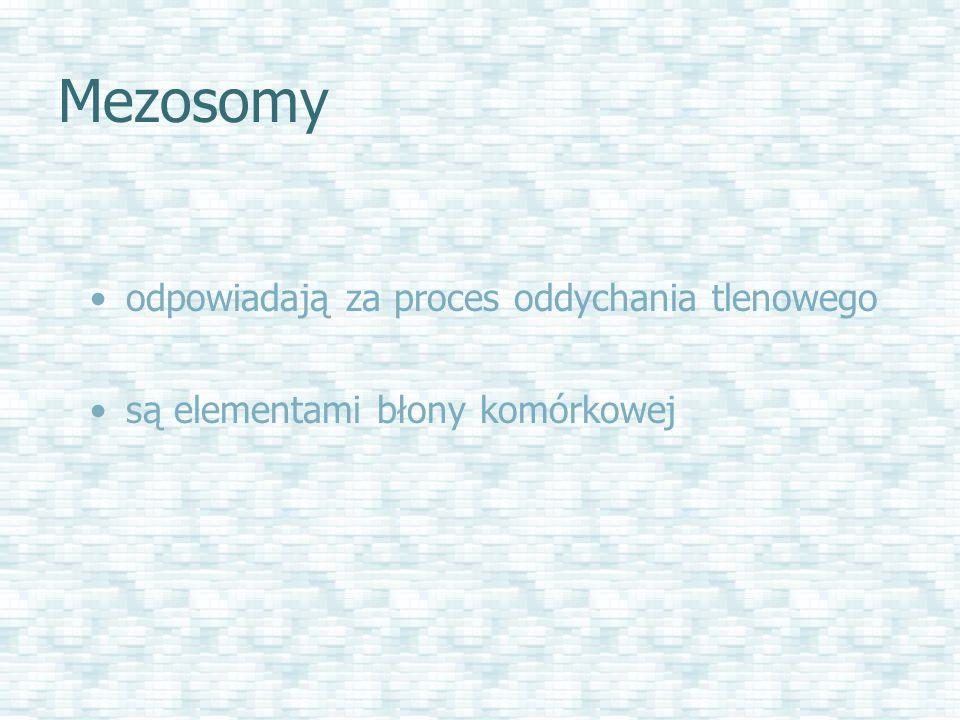 Mezosomy odpowiadają za proces oddychania tlenowego