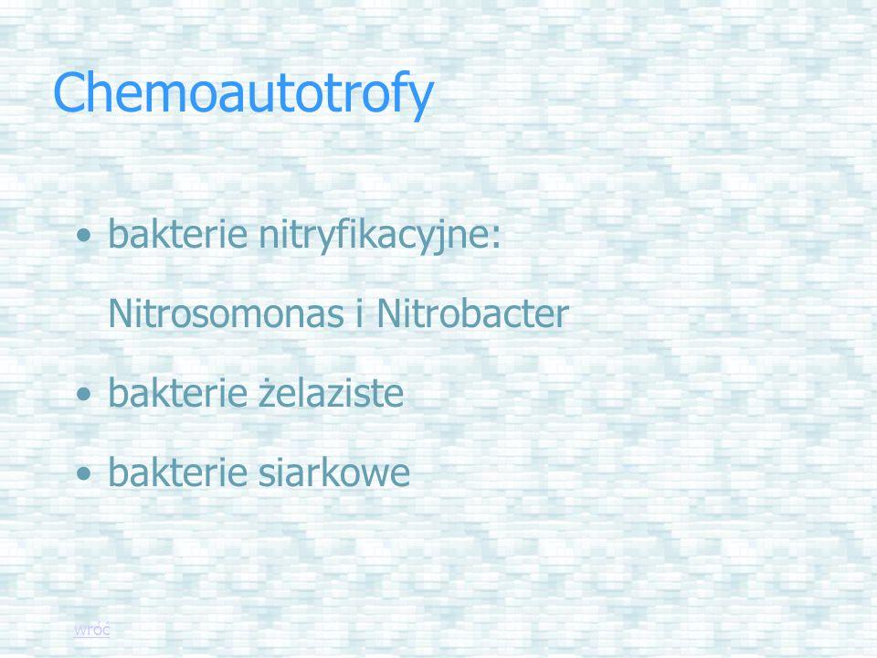 Chemoautotrofy bakterie nitryfikacyjne: Nitrosomonas i Nitrobacter