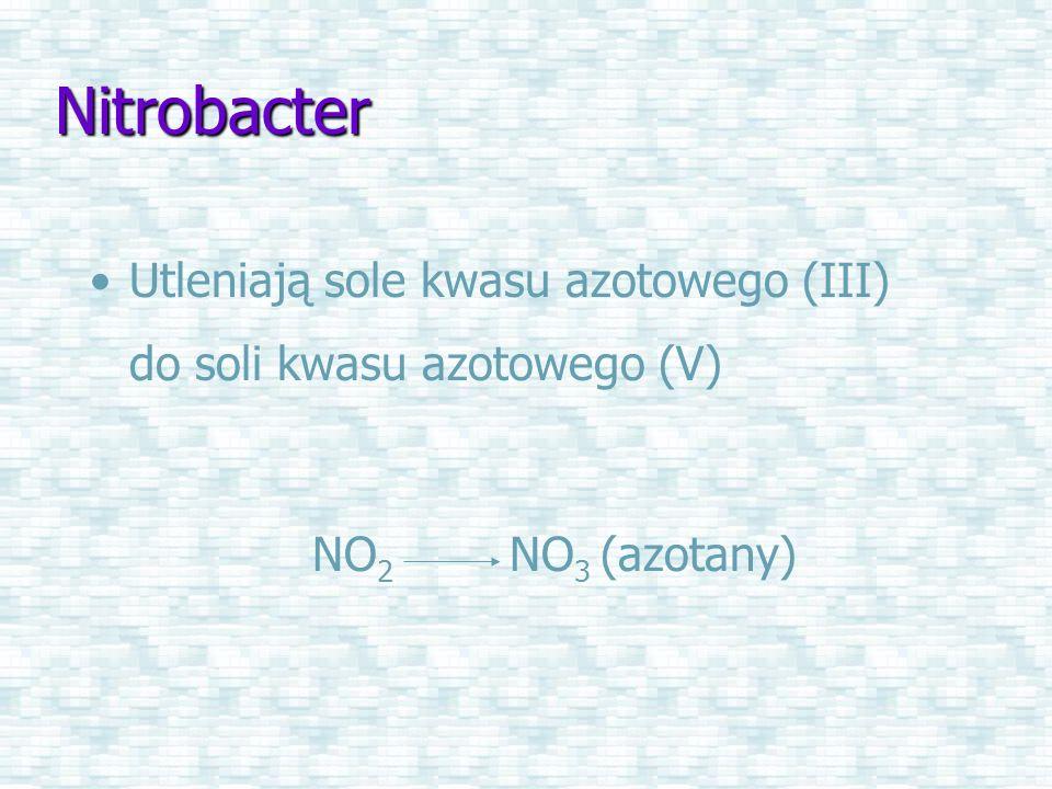 Nitrobacter Utleniają sole kwasu azotowego (III) do soli kwasu azotowego (V) NO2 NO3 (azotany)