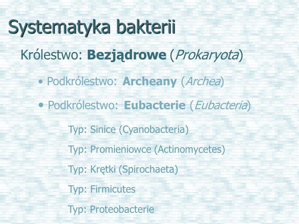 Systematyka bakterii Królestwo: Bezjądrowe (Prokaryota)