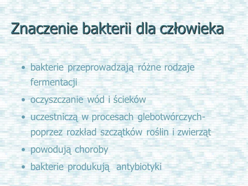 Znaczenie bakterii dla człowieka