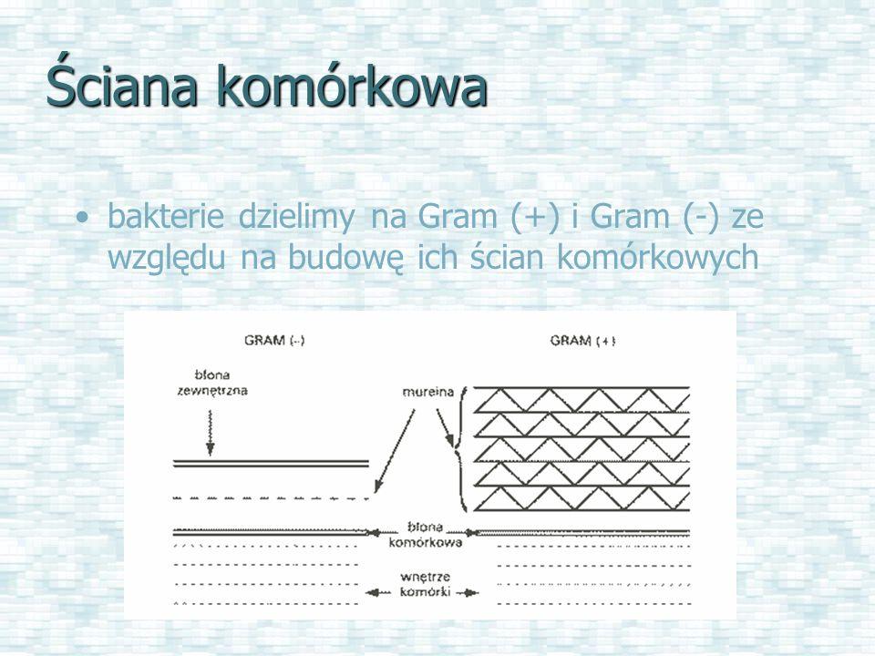 Ściana komórkowa bakterie dzielimy na Gram (+) i Gram (-) ze względu na budowę ich ścian komórkowych.