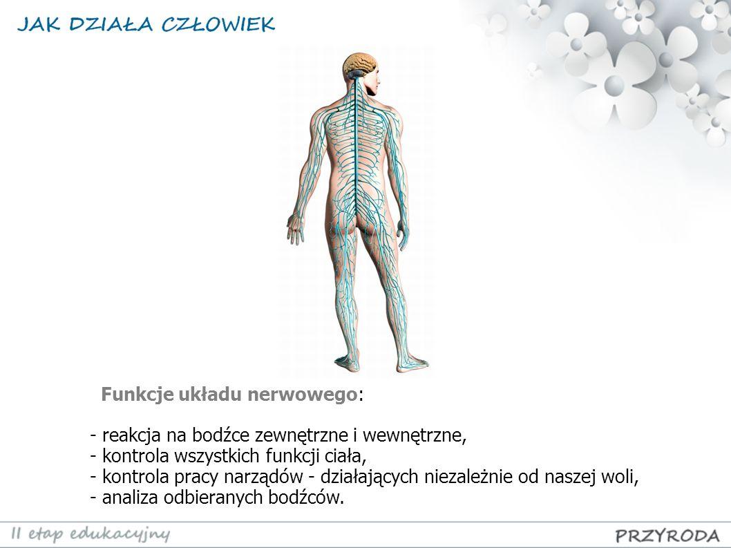Funkcje układu nerwowego: