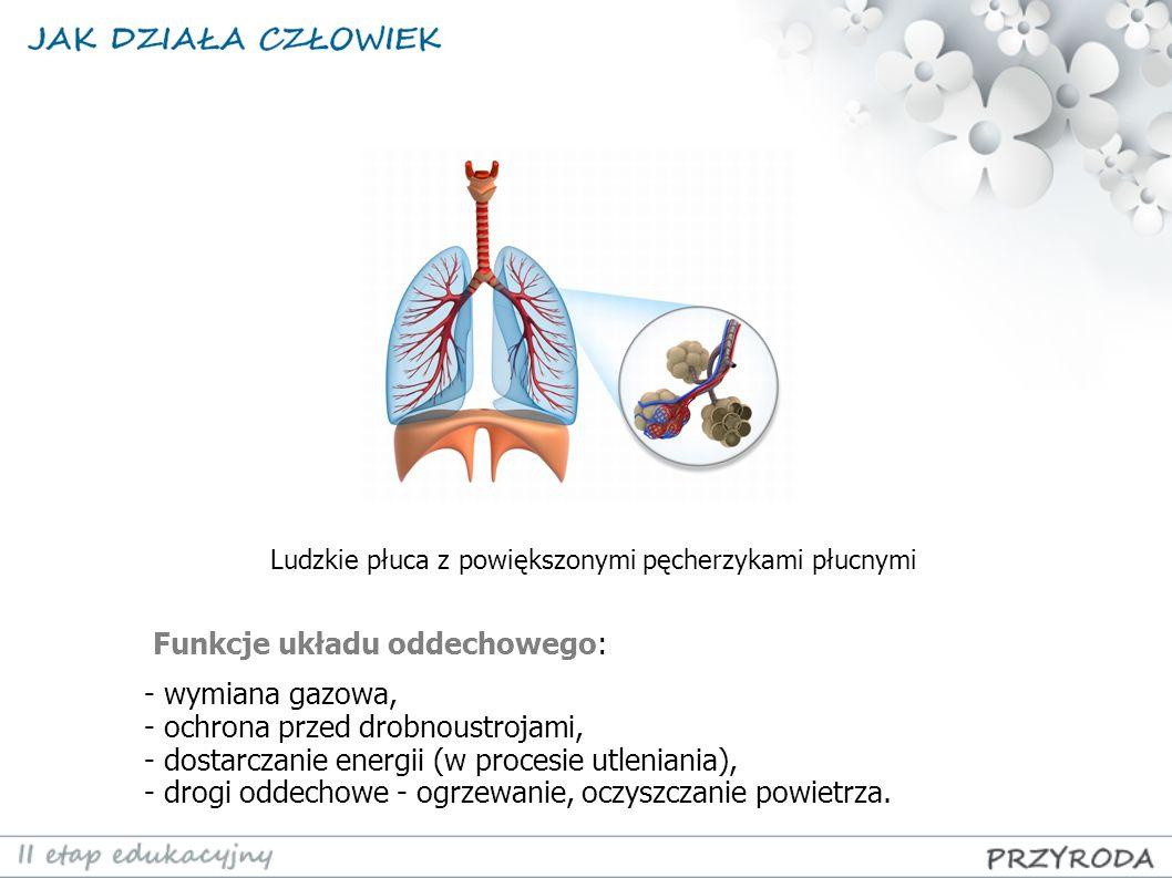 Funkcje układu oddechowego: - wymiana gazowa,
