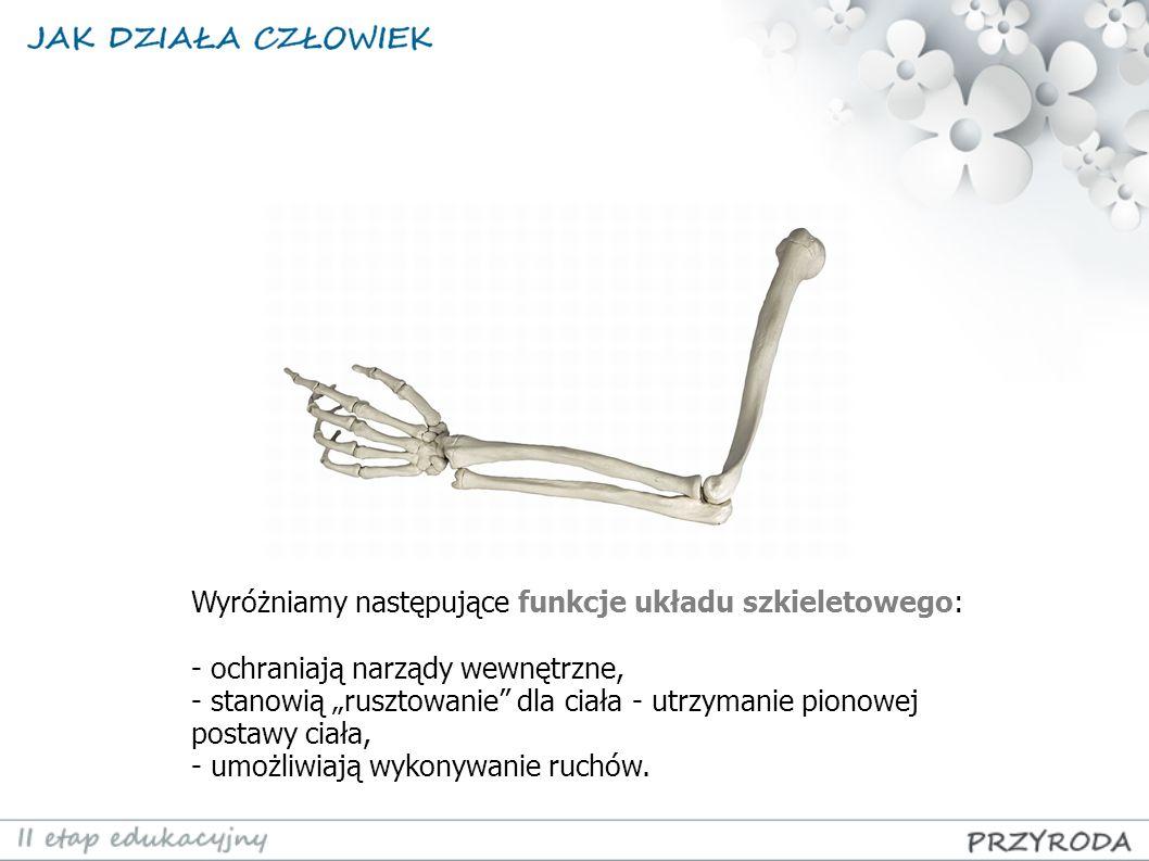 Wyróżniamy następujące funkcje układu szkieletowego: