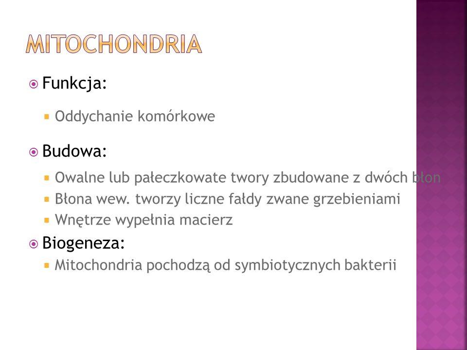 Mitochondria Funkcja: Budowa: Biogeneza: Oddychanie komórkowe