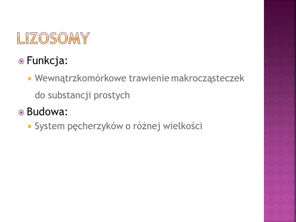 Lizosomy Funkcja: Budowa: