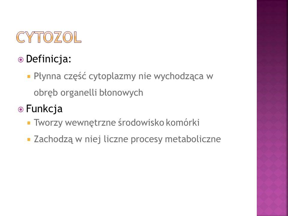 Cytozol Definicja: Funkcja