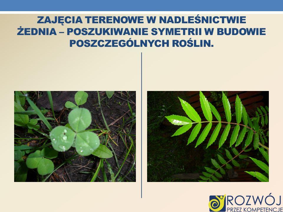 Zajęcia terenowe w Nadleśnictwie Żednia – Poszukiwanie symetrii w budowie poszczególnych roślin.