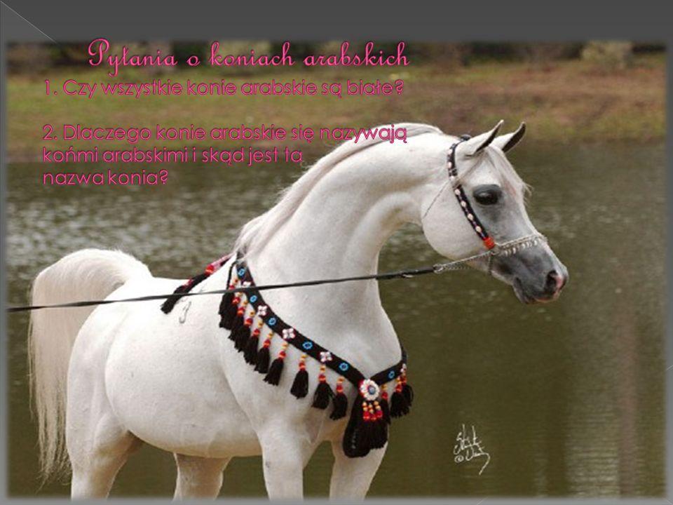 Pytania o koniach arabskich 1. Czy wszystkie konie arabskie są białe.