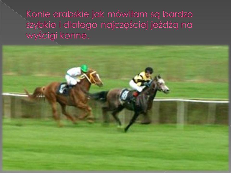 Konie arabskie jak mówiłam są bardzo szybkie i dlatego najczęściej jeżdżą na wyścigi konne.