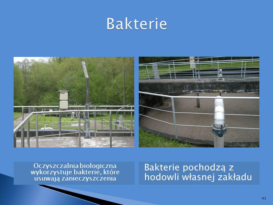 Bakterie Bakterie pochodzą z hodowli własnej zakładu