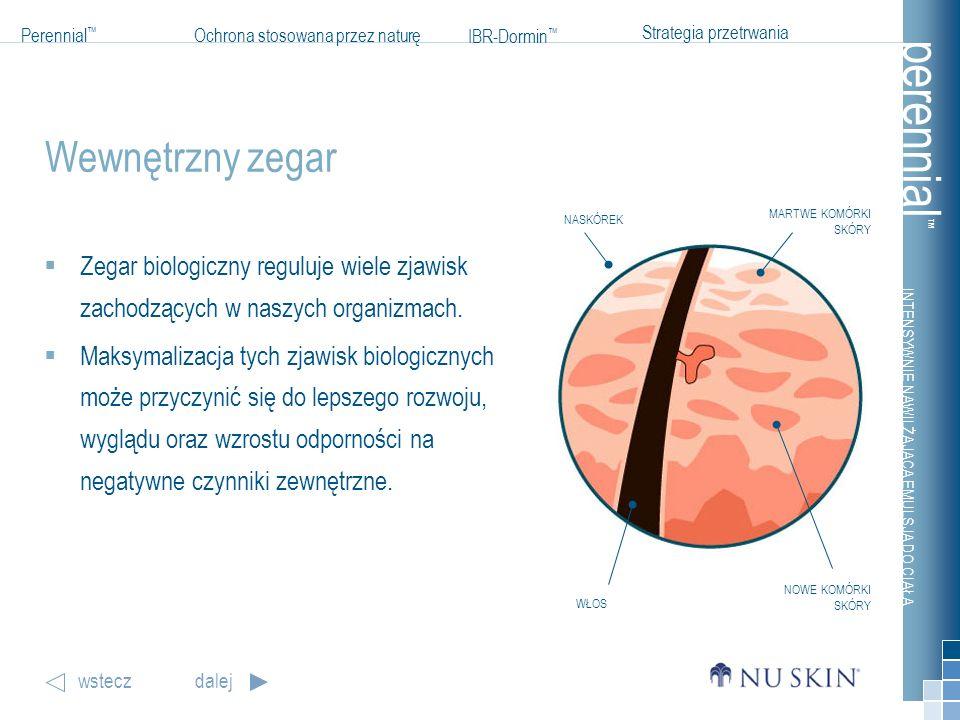 Wewnętrzny zegar MARTWE KOMÓRKI SKÓRY. NASKÓREK. Zegar biologiczny reguluje wiele zjawisk zachodzących w naszych organizmach.