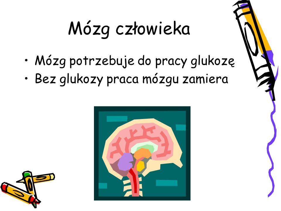 Mózg człowieka Mózg potrzebuje do pracy glukozę