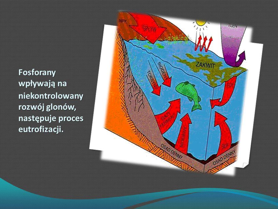 Fosforany wpływają na niekontrolowany rozwój glonów, następuje proces eutrofizacji.