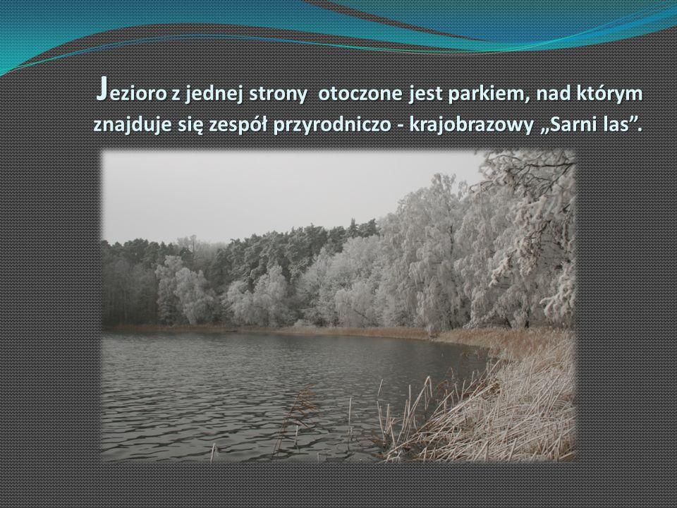 """Jezioro z jednej strony otoczone jest parkiem, nad którym znajduje się zespół przyrodniczo - krajobrazowy """"Sarni las ."""