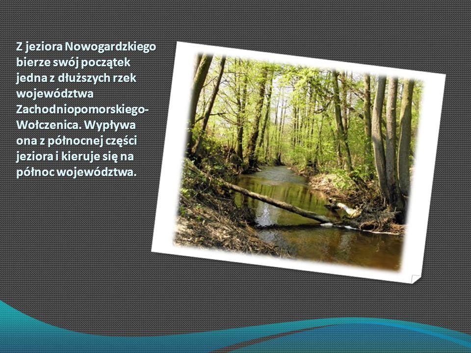 Z jeziora Nowogardzkiego bierze swój początek jedna z dłuższych rzek województwa Zachodniopomorskiego- Wołczenica.