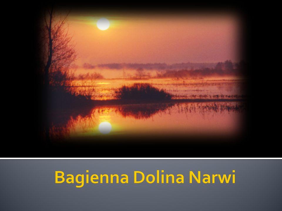 Bagienna Dolina Narwi