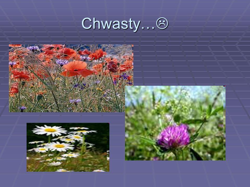 Chwasty…