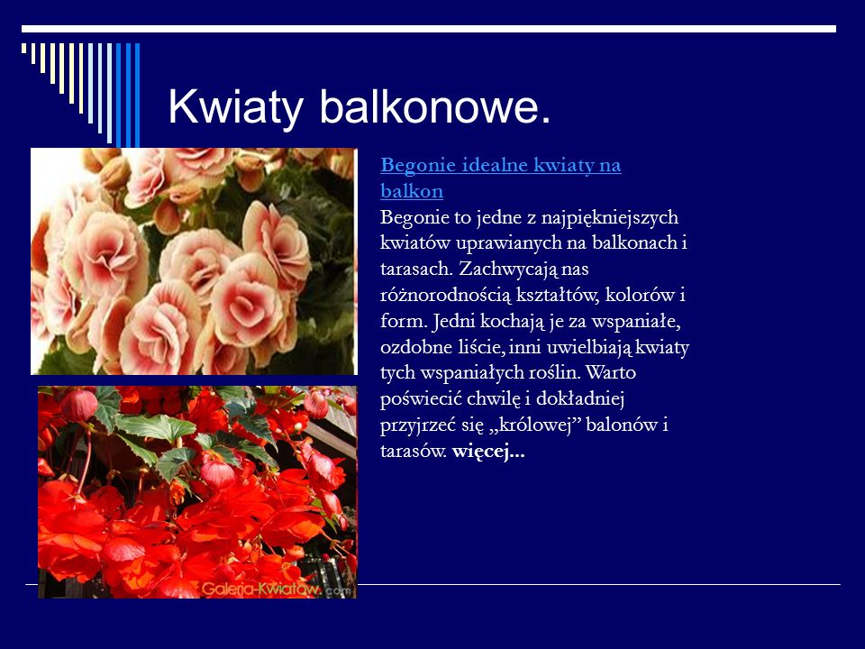 Kwiaty balkonowe. Begonie idealne kwiaty na balkon