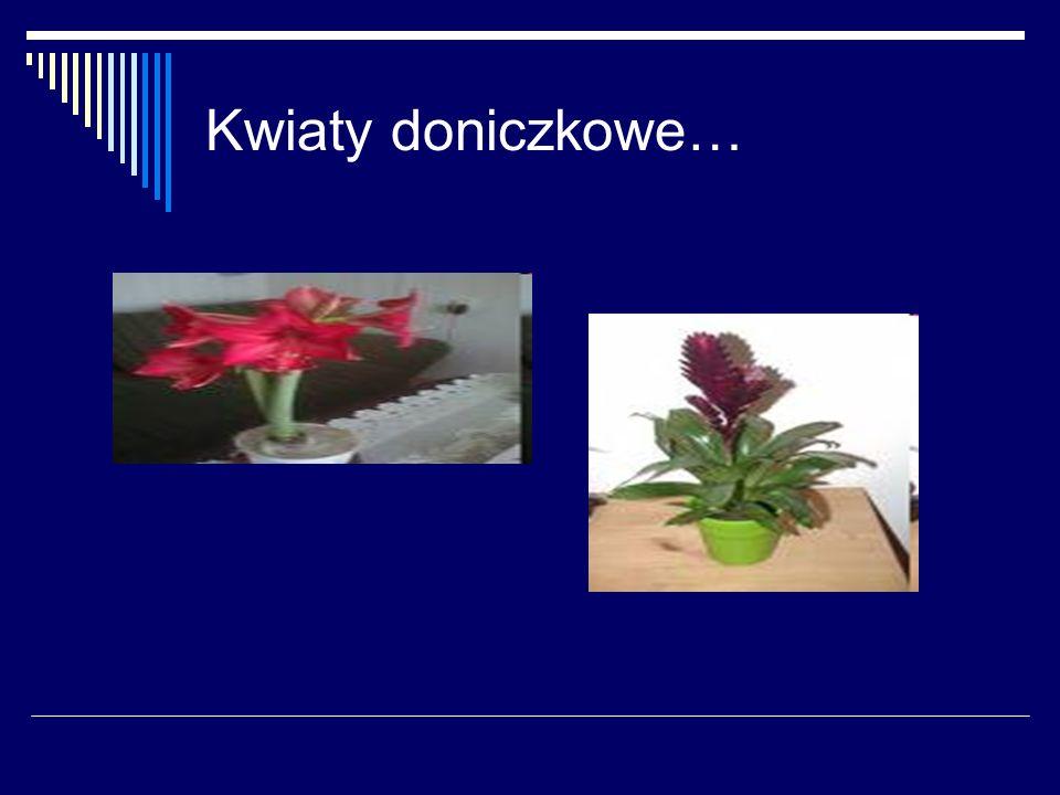 Kwiaty doniczkowe…