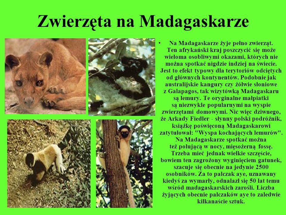 Zwierzęta na Madagaskarze