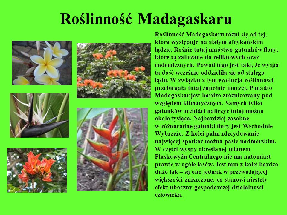 Roślinność Madagaskaru