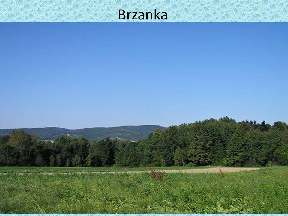 Brzanka