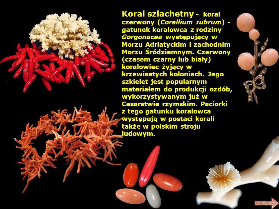 Koral szlachetny - koral czerwony (Corallium rubrum) - gatunek koralowca z rodziny Gorgonacea występujący w Morzu Adriatyckim i zachodnim Morzu Śródziemnym.