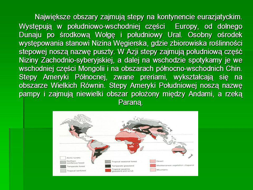 Największe obszary zajmują stepy na kontynencie eurazjatyckim