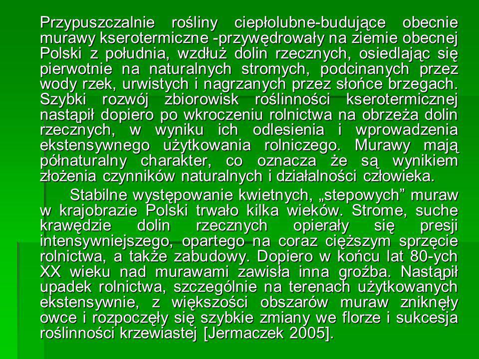 Przypuszczalnie rośliny ciepłolubne-budujące obecnie murawy kserotermiczne -przywędrowały na ziemie obecnej Polski z południa, wzdłuż dolin rzecznych, osiedlając się pierwotnie na naturalnych stromych, podcinanych przez wody rzek, urwistych i nagrzanych przez słońce brzegach. Szybki rozwój zbiorowisk roślinności kserotermicznej nastąpił dopiero po wkroczeniu rolnictwa na obrzeża dolin rzecznych, w wyniku ich odlesienia i wprowadzenia ekstensywnego użytkowania rolniczego. Murawy mają półnaturalny charakter, co oznacza że są wynikiem złożenia czynników naturalnych i działalności człowieka.