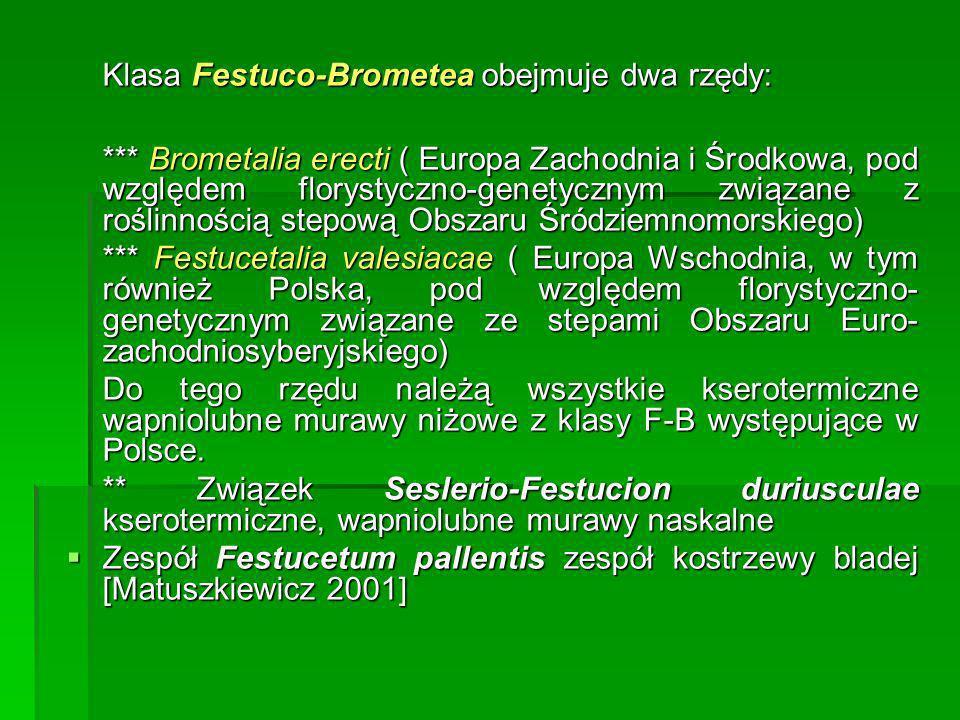 Klasa Festuco-Brometea obejmuje dwa rzędy: