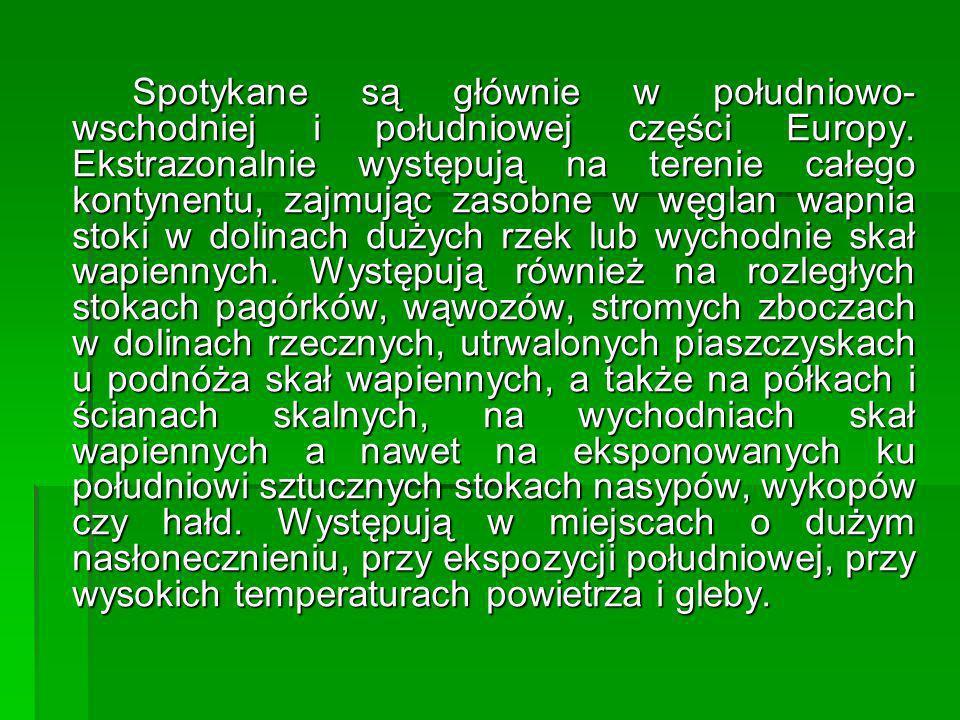Spotykane są głównie w południowo-wschodniej i południowej części Europy.