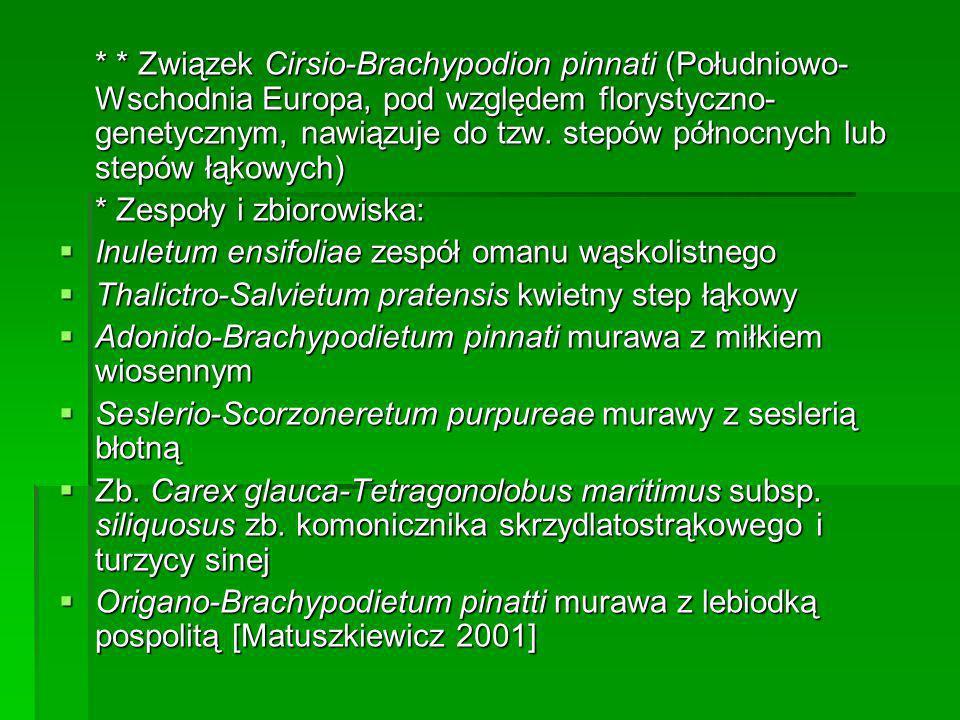 * * Związek Cirsio-Brachypodion pinnati (Południowo-Wschodnia Europa, pod względem florystyczno-genetycznym, nawiązuje do tzw. stepów północnych lub stepów łąkowych)
