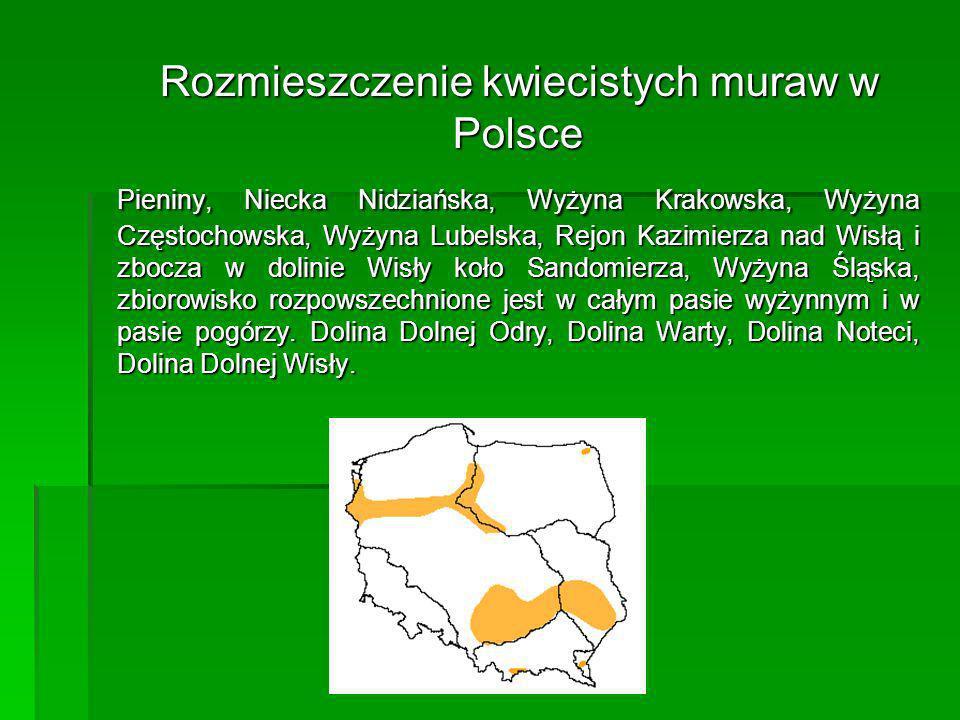 Rozmieszczenie kwiecistych muraw w Polsce
