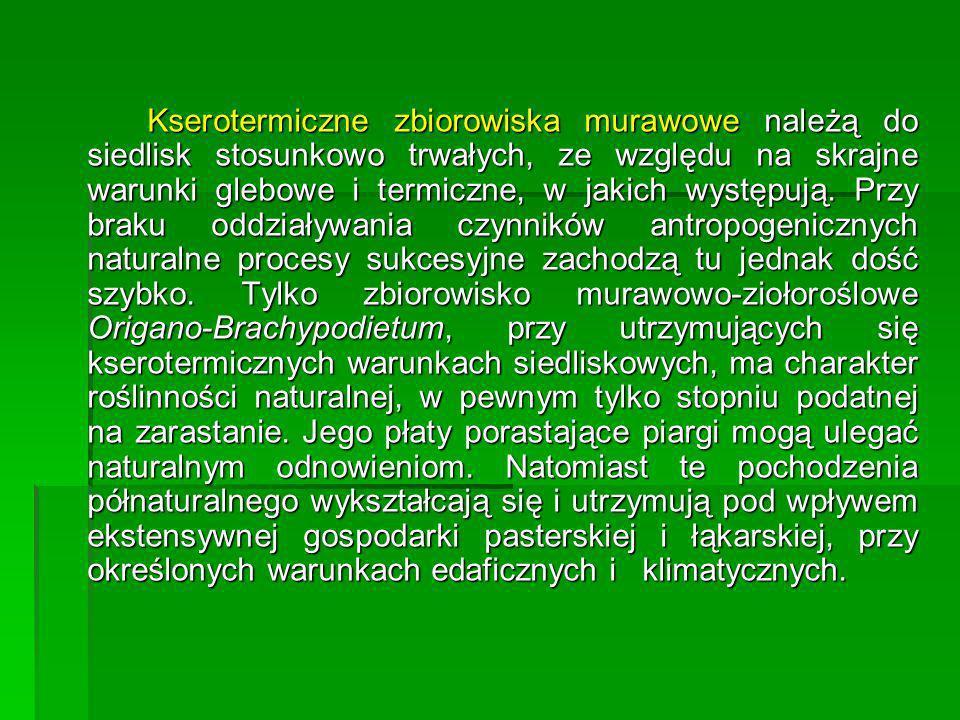 Kserotermiczne zbiorowiska murawowe należą do siedlisk stosunkowo trwałych, ze względu na skrajne warunki glebowe i termiczne, w jakich występują.