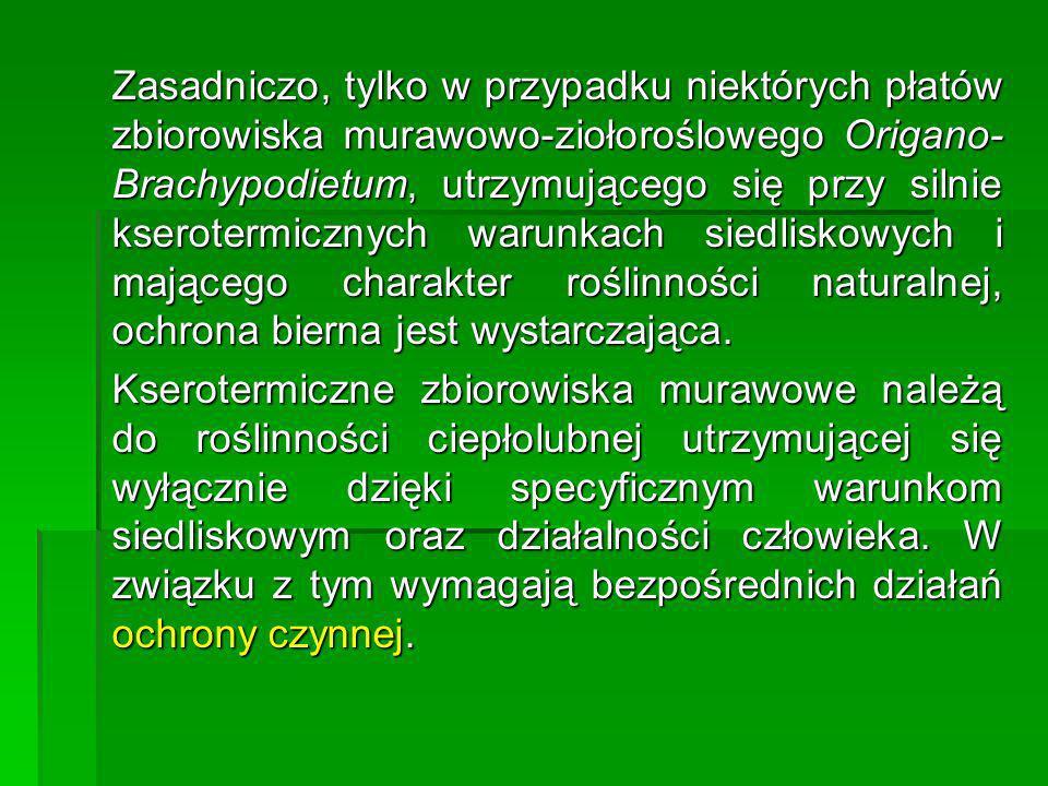 Zasadniczo, tylko w przypadku niektórych płatów zbiorowiska murawowo-ziołoroślowego Origano-Brachypodietum, utrzymującego się przy silnie kserotermicznych warunkach siedliskowych i mającego charakter roślinności naturalnej, ochrona bierna jest wystarczająca.