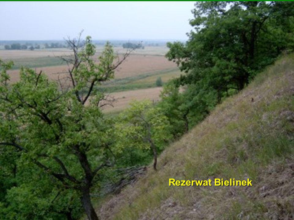 Rezerwat Bielinek