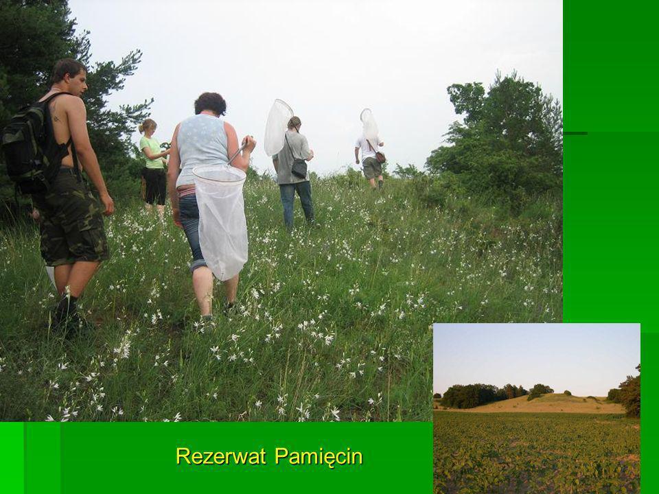 Rezerwat Pamięcin